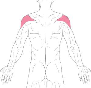肩-三角筋-後