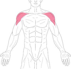肩-三角筋